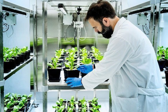 Green Has Italia's growth chamber