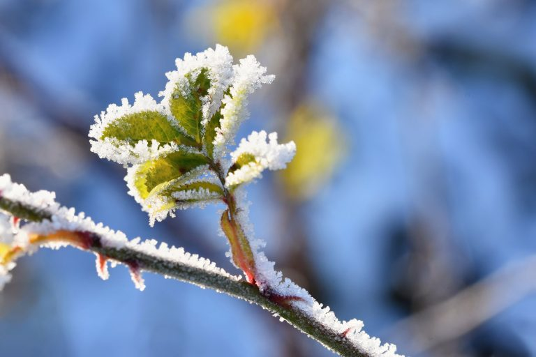 Protect your crops from the return of frost