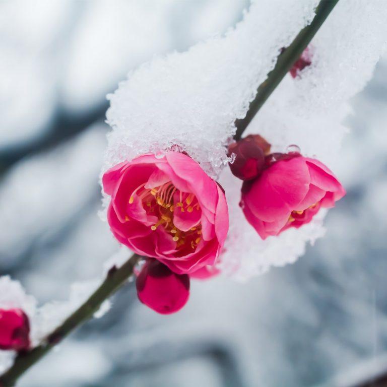 Proteggi le tue colture dai ritorni di freddo