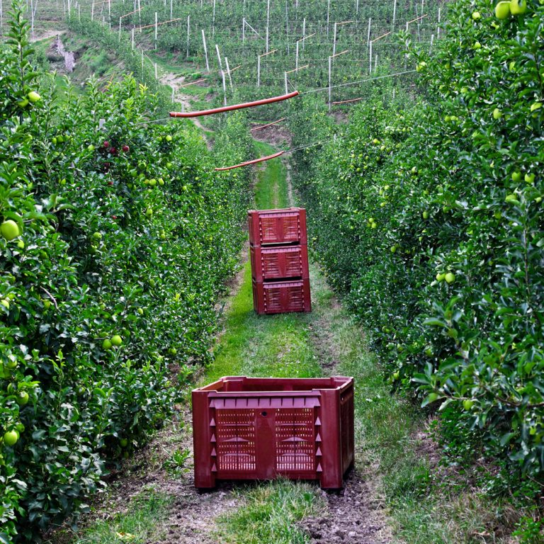 Foliar fertilisation in post-harvest